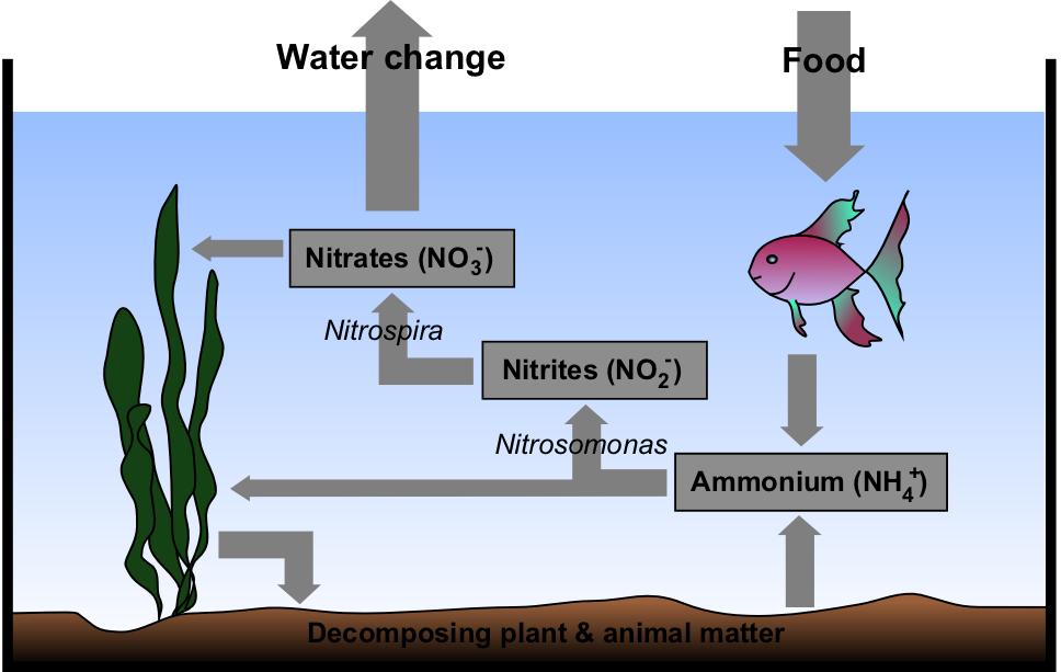 cycling your aquarium nitrogen cycle marine freshwater saltwater reef