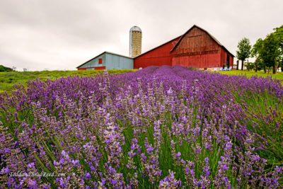 Lavender Hill Farm excited to be Boyne area destination