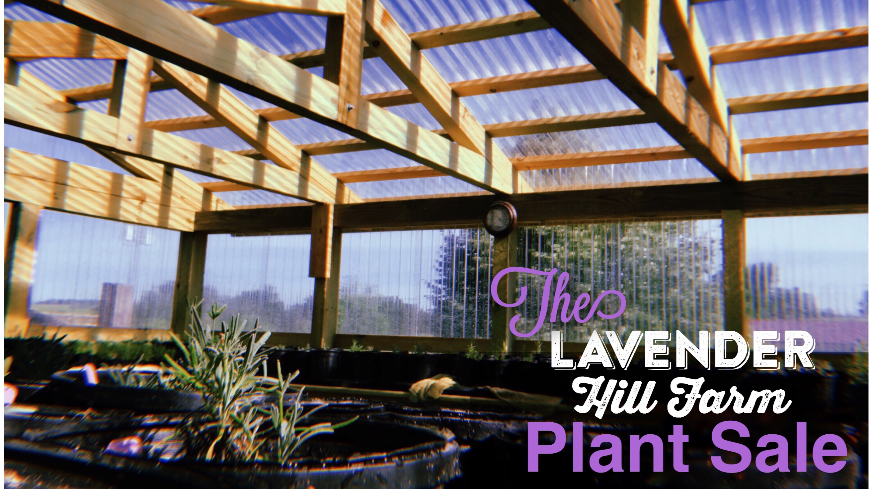 Lavender Hill Farm Annual Plant Sale