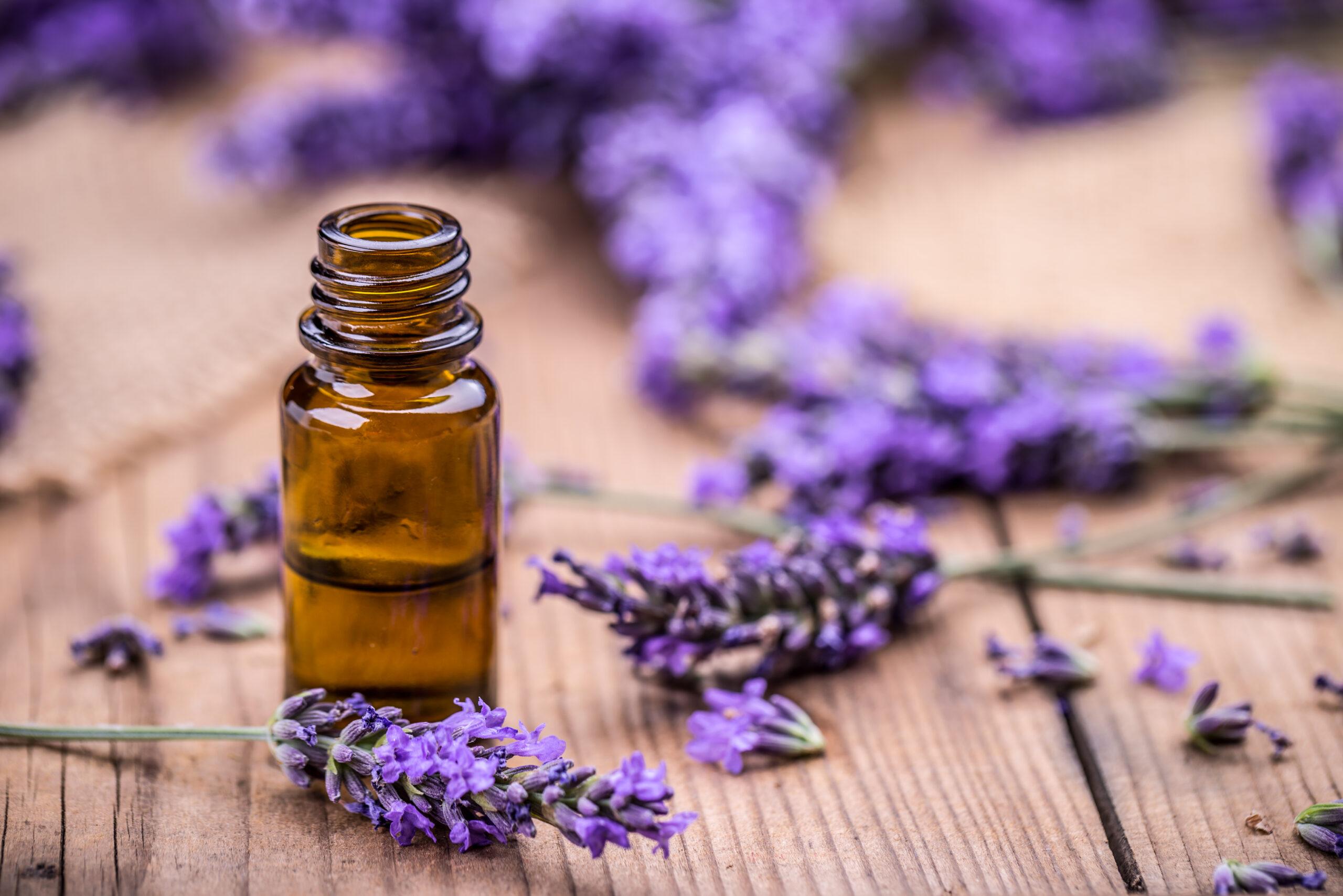 Lavender Essential Oil Distillation Workshop