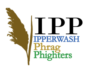 IPP Community Phragmites Cull @ Tanner-West Parkway Swale