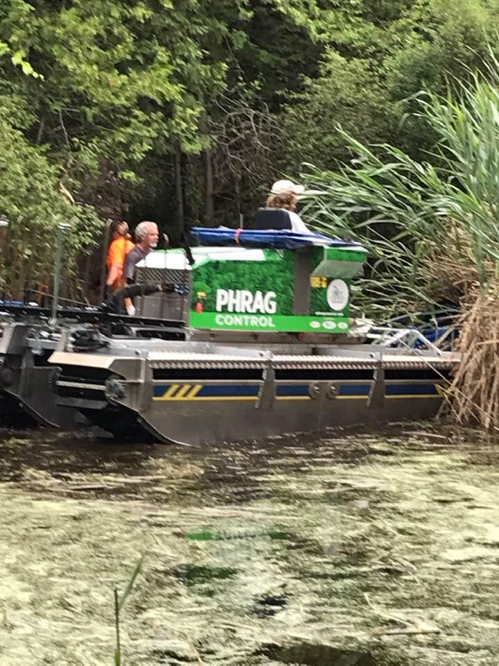 Wetland Phrag removal