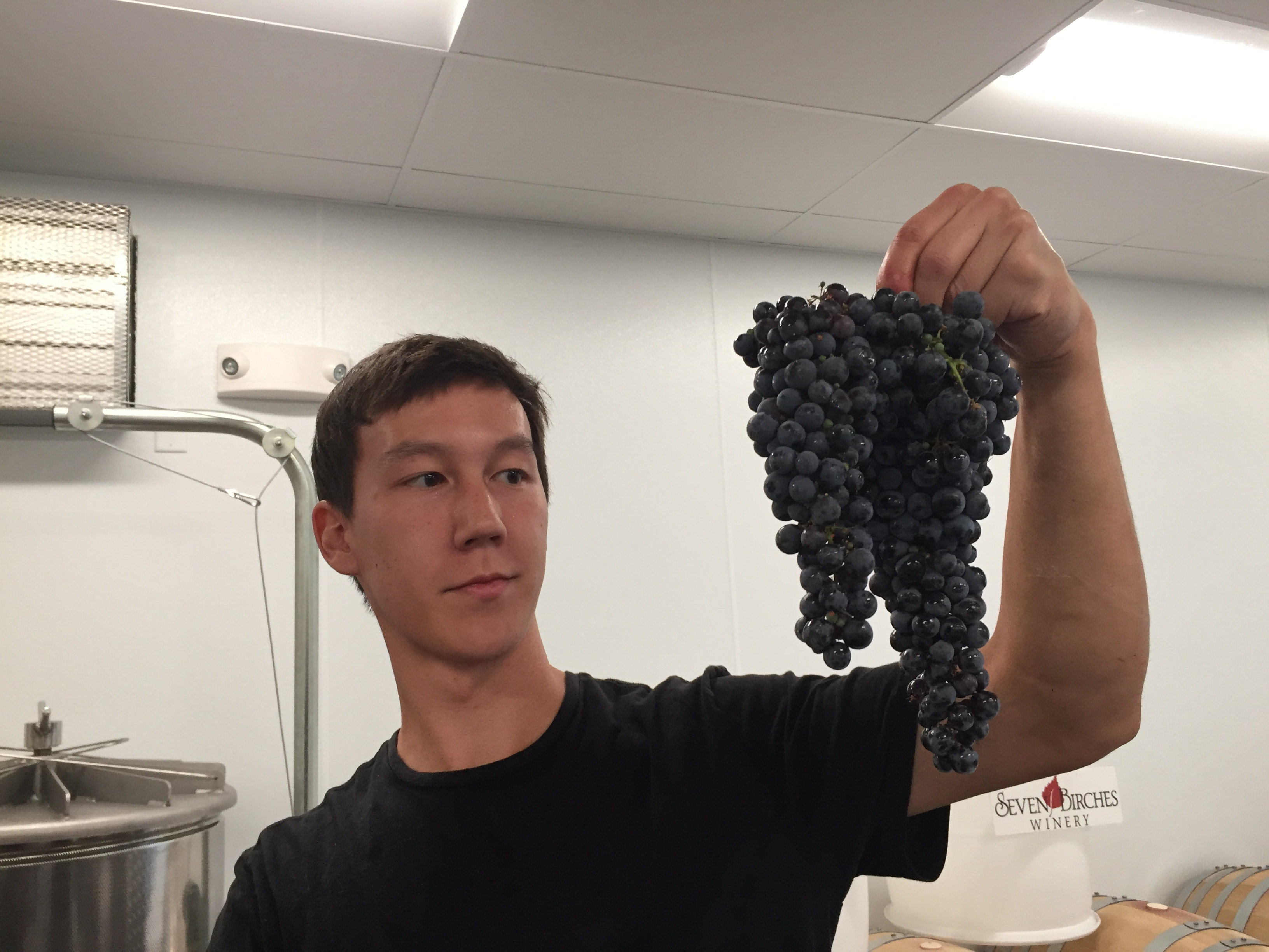 Ultimate Winemaking Experience