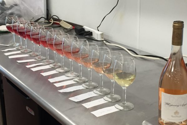 Gagon-Perkins Wedding Wine Blending Day