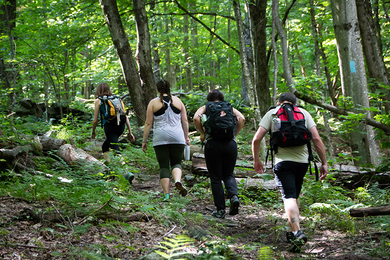 A group of four young adults hike along a flat wooded path in summer.