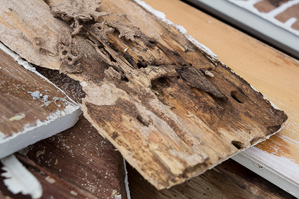 termite ridden floor damage