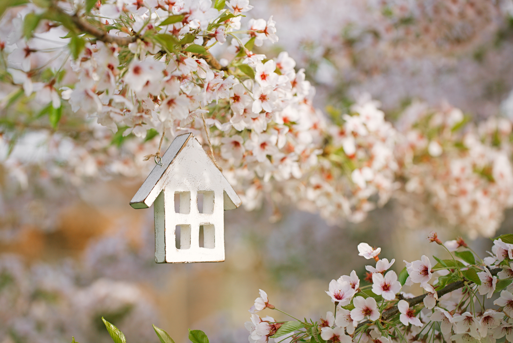 common pests of spring