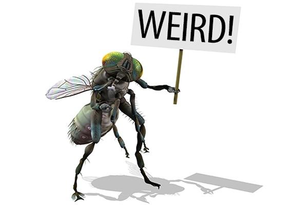 worlds weirdest insects