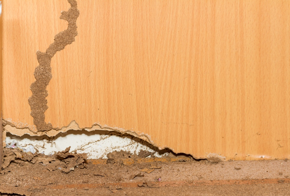 Termites Eating You Out Of House And Home
