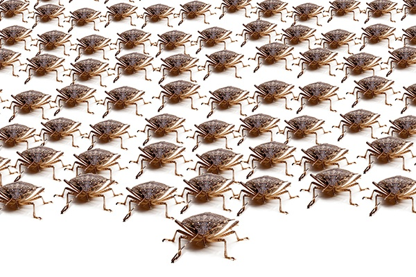 How-To-Get-Rid-Of-Stinkbugs