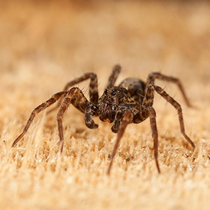 spider-control-holistic-pest-solutions