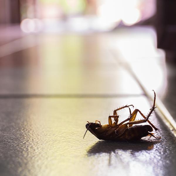 roach-control-holistic