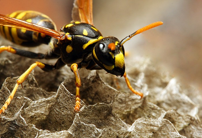 Time-For-Aggressive-Yellow-Jackets