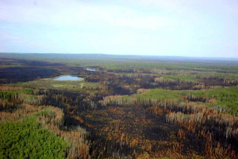 Natural disturbance in the form of wildfire, natural retention in the forest