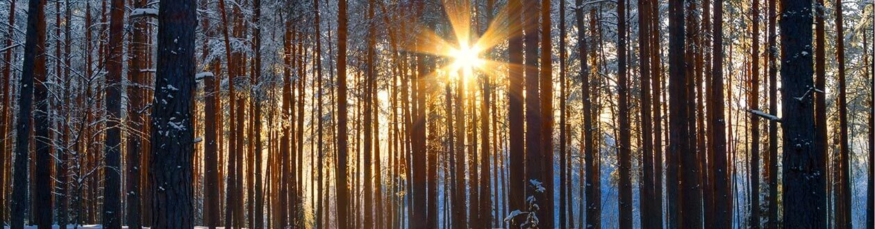 A forest in the Harz Mountains, Germany during the winter, sun peeking through the trees