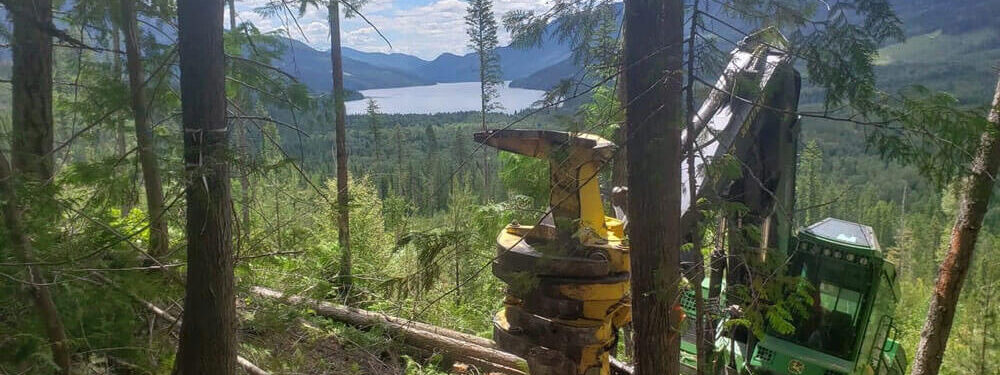 Mercer Forestry Services