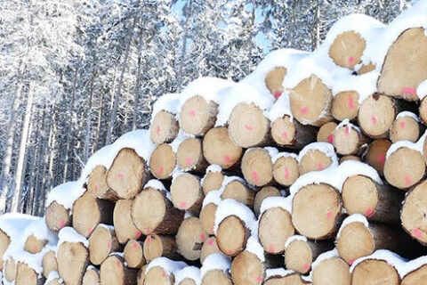A pile of roundwood on a Mercer work site in the winter