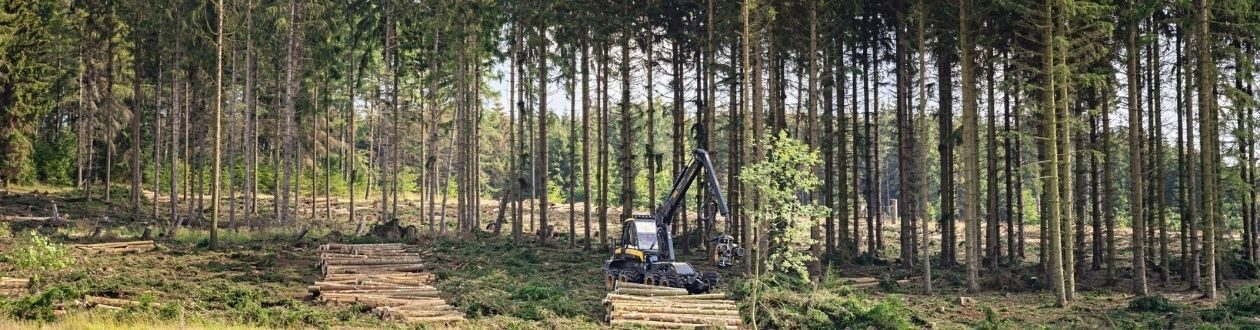 A forest in the Harz Mountains, Germany during the summer, with a Mercer Holz harvester working