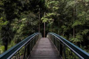 Walking bridge to a forrest