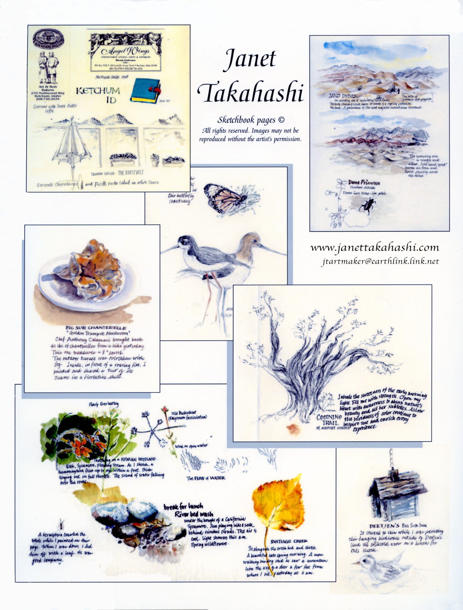 Sketchbook Montage by Janet Takahashi