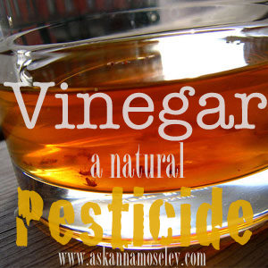 How to use vinegar to repel everything from flies to mosquitoes | Ask Anna