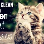 How to clean to prevent cat allergies - Ask Anna