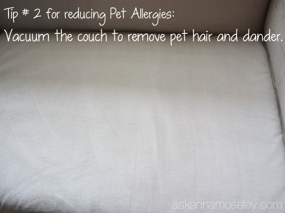 Vacuum the furniture to remove pet hair and dander - Ask Anna