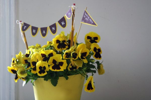Potted pansies for a teacher