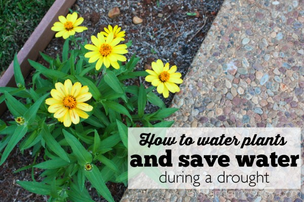 How to save water but still water your flowers during a droughtHow to save water but still water your flowers during a drought - Ask Anna