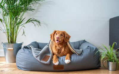 Tips for Decorating Your Pet-Friendly Apartment