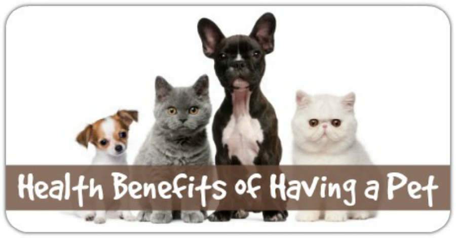 Health Benefits of Having a Pet