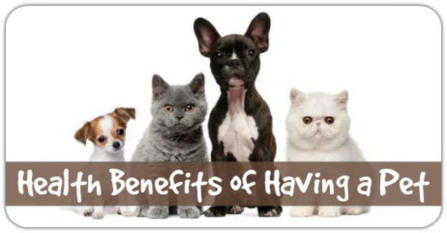 Health Benefits of Having a Pet