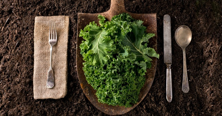 7 Things You Need To Know About Kale