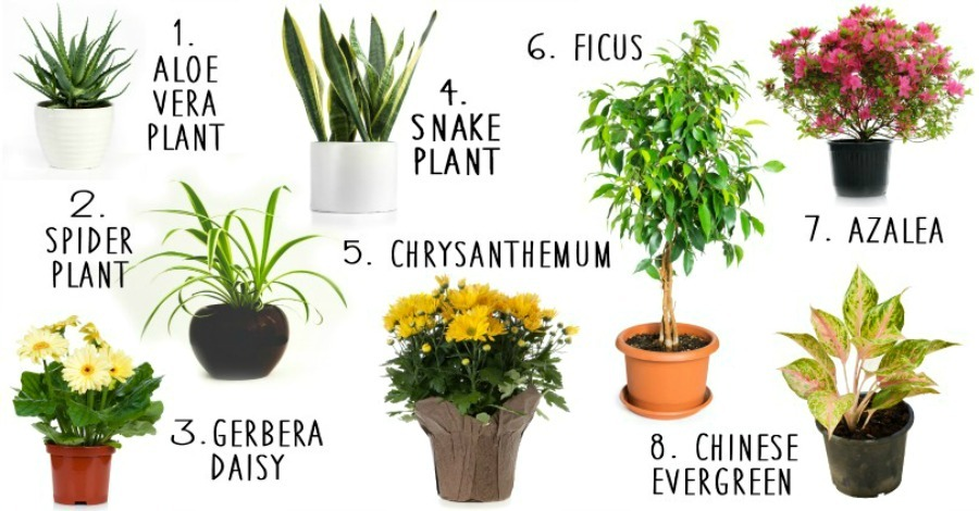 8 House Plants That Actually Purify the Air - https://healthpositiveinfo.com/8-house-plants-that-actually-purify-your-air.html