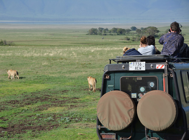 lions-in-ngorongoro-crater