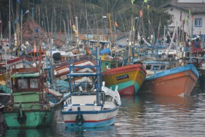 Fishing boats in Mirissa's harbor.