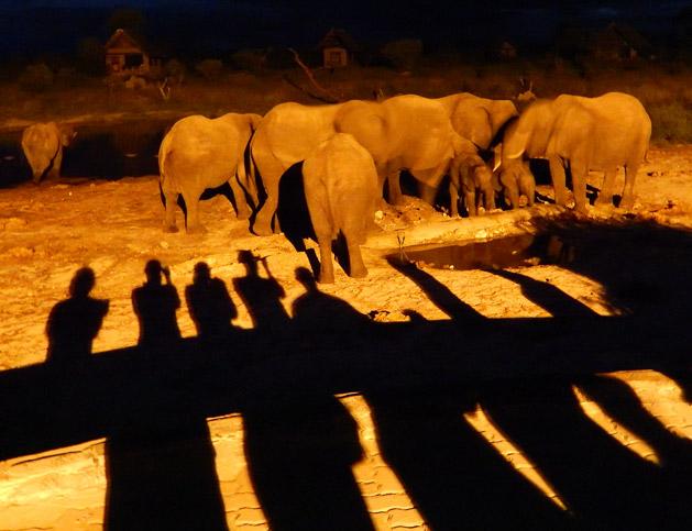 night-drinking-elephant-sands