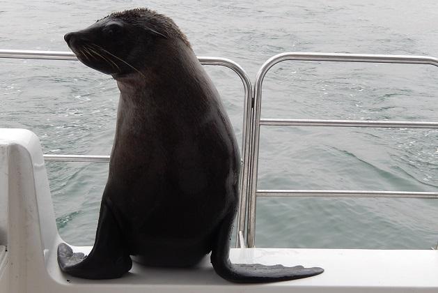 splash-the-seal