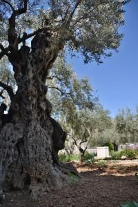 oldgarden-tree