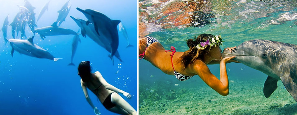 swim-with-the-dolphins-dream