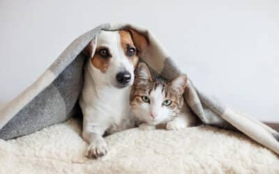 Everything You Need to Know About Pets at Northwind