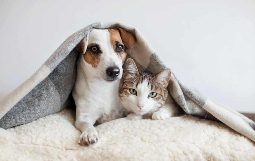 Dog and cat next to each other under blanket