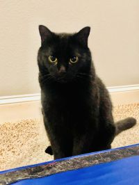 Stormy - ADOPTED