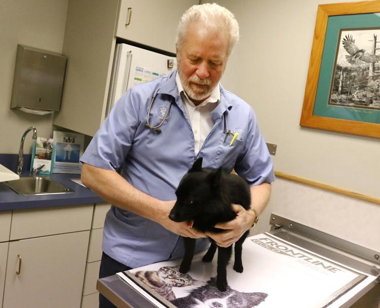 Dr Ross Holding Dog