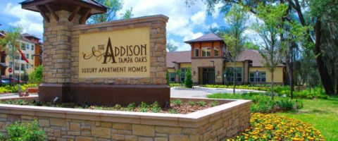 The Addison at Tampa Oaks