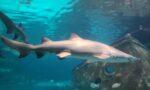 Ripleys Aquarium in Gatlinburg