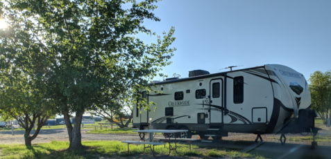 RV with trees level site