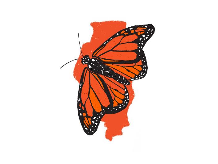 Monarch On Illinois State