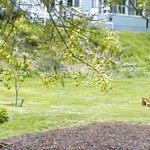 lawn Biddeford Scarborough Maine