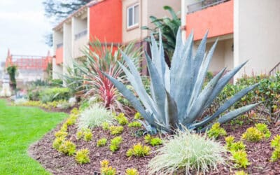 Here's How Serena Vista Apartments Will Help You Live a Sustainable Lifestyle